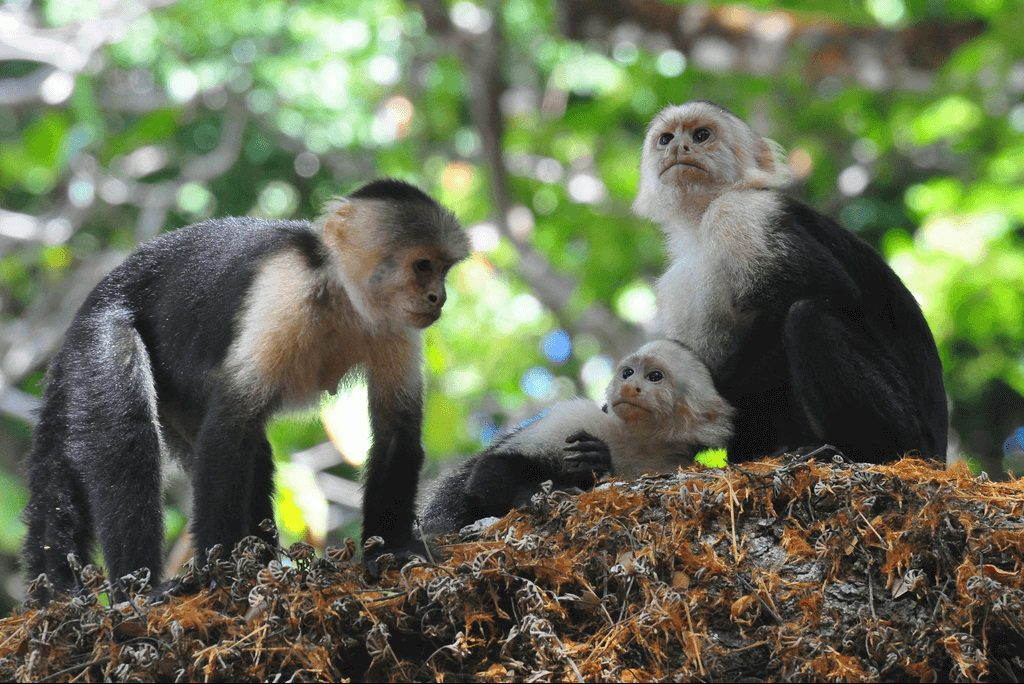 Costa Rica Family Vacation Wildlife Viewing