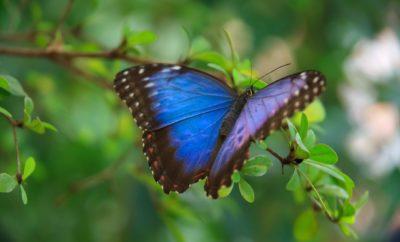 Awe-Inspiring Butterflies