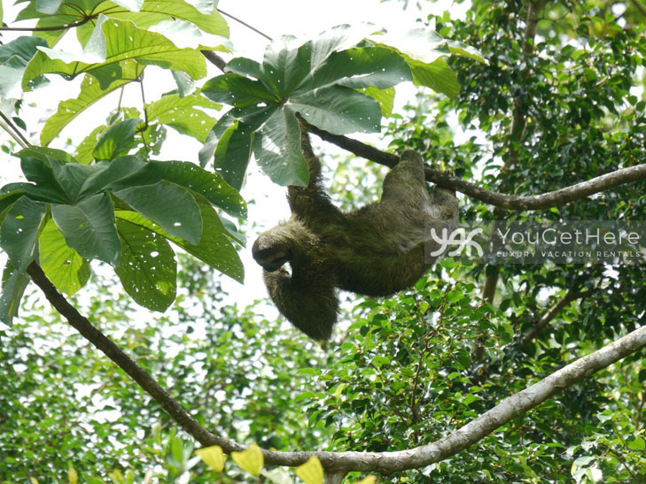 Luxury Villa-Dominical-Costa Rica-LaLibelula