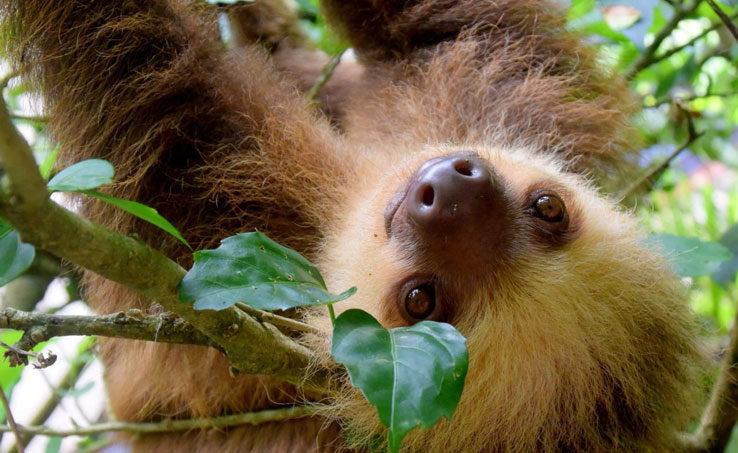 Spotting a Sloth