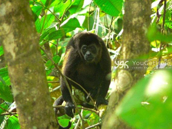 Vacation Villa-Dominical-Costa Rica-LaLibelula