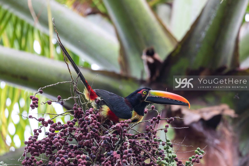 Costa Rica Bird on Family Vacation in Costa Rica