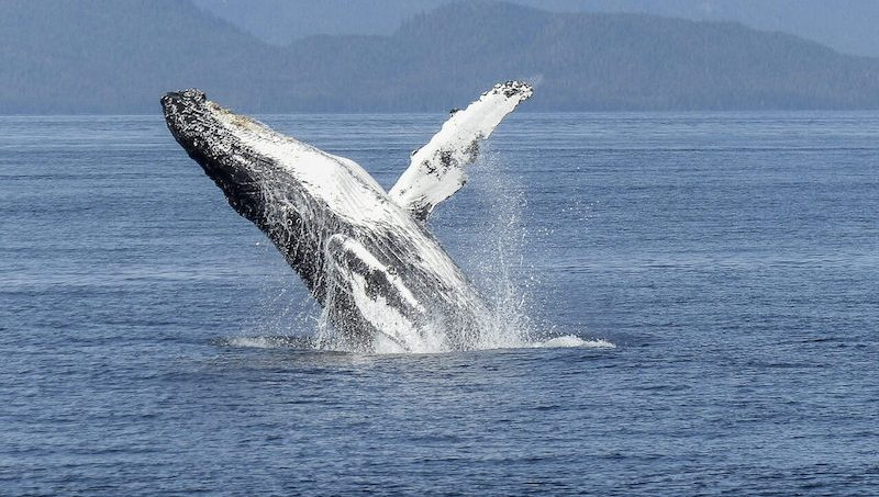 Whales in Costa Rica