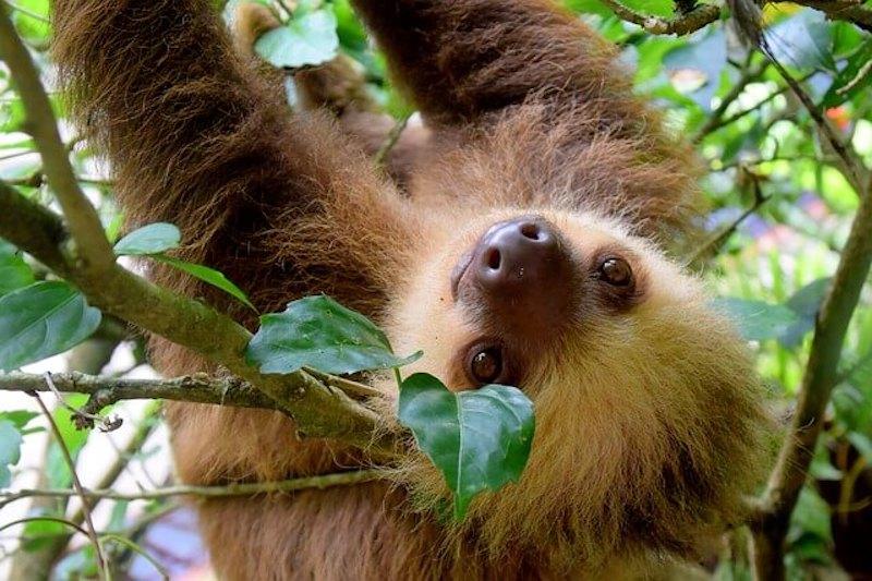 happy-sloth-daytime-costa-rica