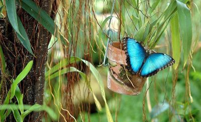 Incredible Insects of Costa Rica